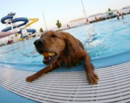 Doggie Dive In Swim - Branson RecPlex
