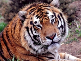 National Tiger Sanctuary in Branson, MO