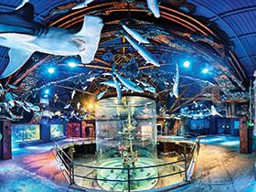 Wonders of Wildlife Museum & Aquarium in Branson, MO