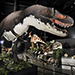 Branson Dinosaur Museum in Branson, MO