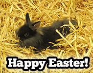 Spend Easter in Branson!