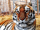National Tiger Sanctuary Photo #3
