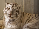 National Tiger Sanctuary Photo #2