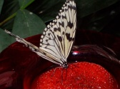 Butterfly Palace & Rainforest Adventure Photo #2